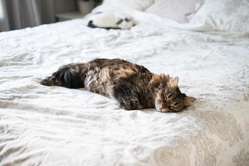 katter som sover