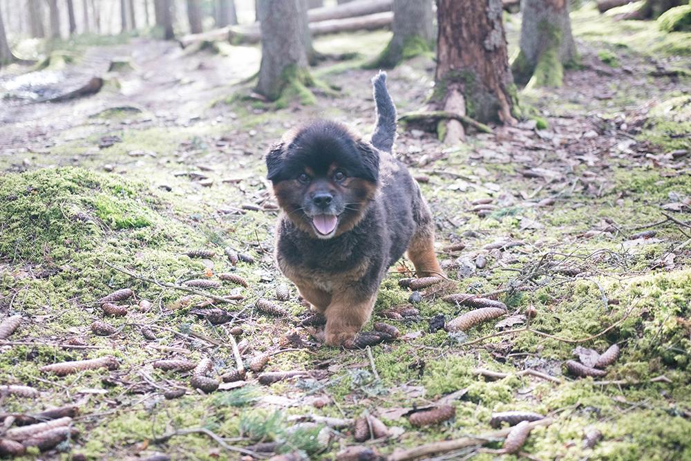 bonzo lös i skogen