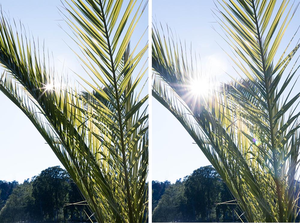 semester avkoppling solsken palmer