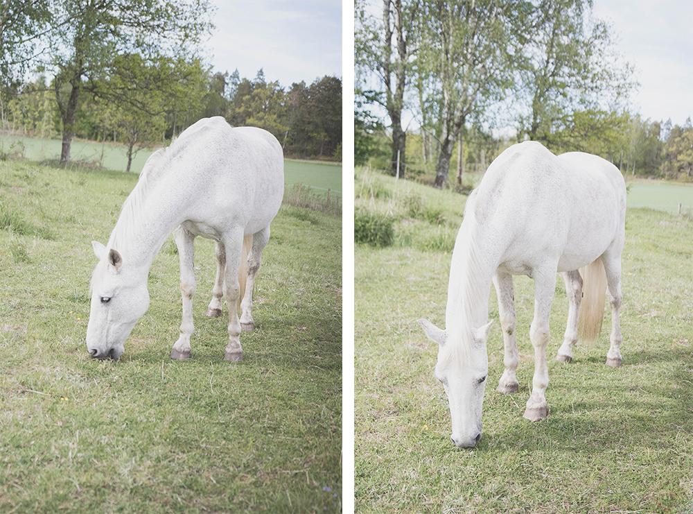 en gång hästtjej, alltid hästtjej