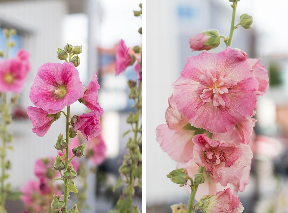 vackra blommor i smögen