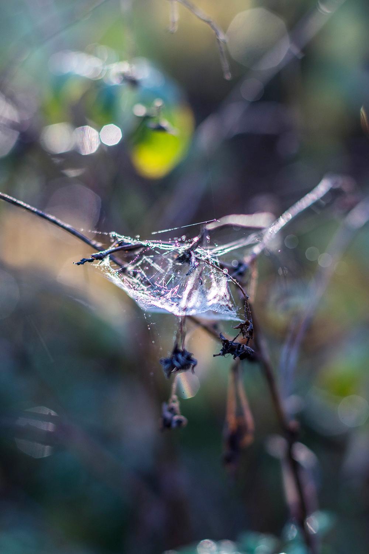 spingelnät i höstkylan