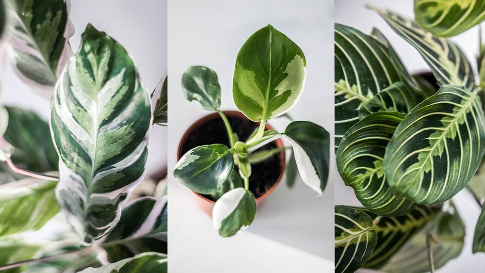 Min Facebook grupp | Crazy Plant Parents
