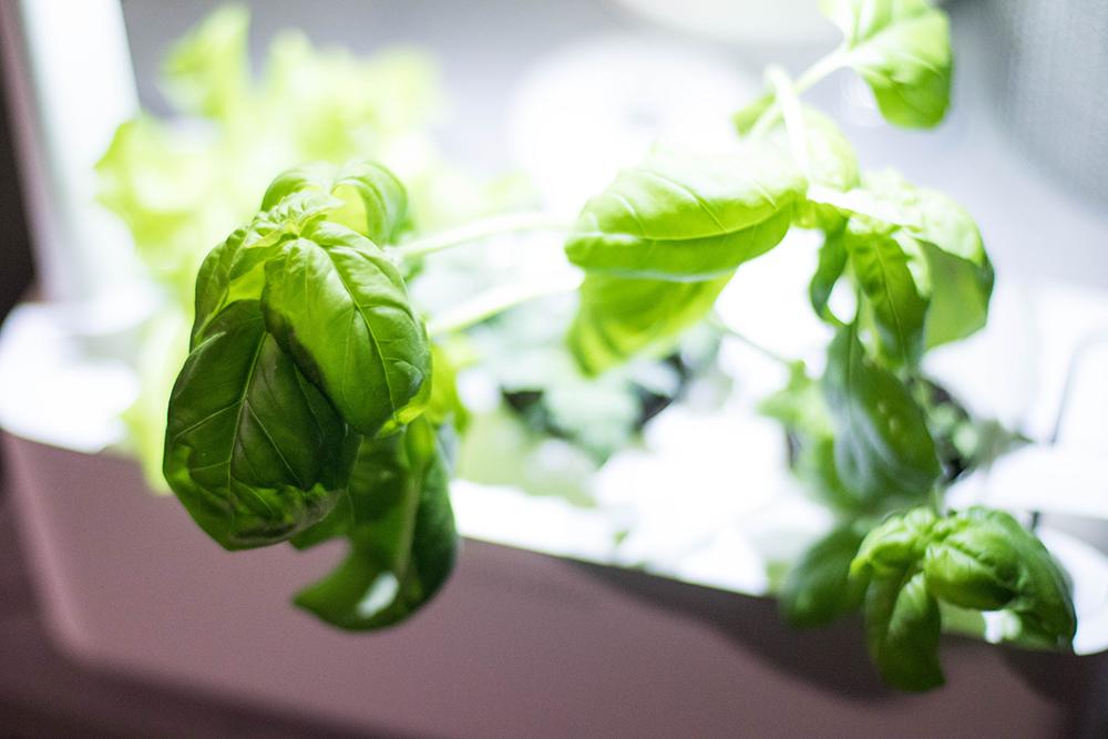 Basilika smart garden click and grow cervera.se