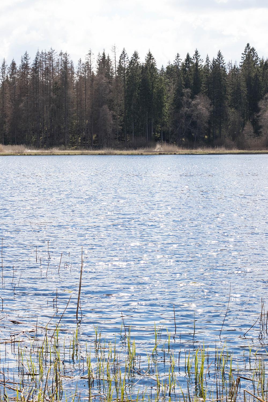 Vår Lördag | Skogspromenad och testamente
