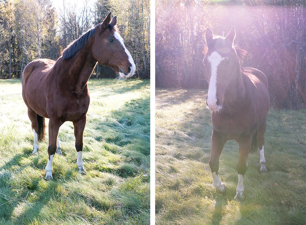 Spegelblankt vatten och hästmys