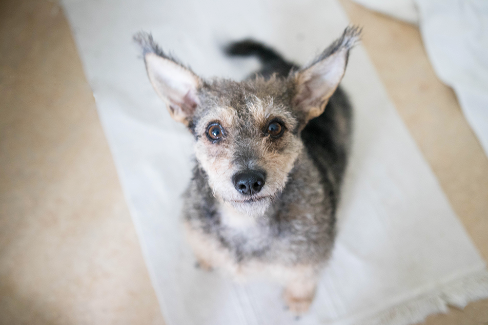Kira gatuhund från ryssland